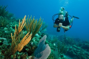 PADI Open Water Scuba Instructor Course in Pattaya