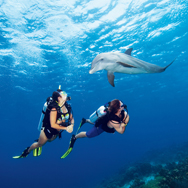 PADI Open Water Diver Course in Pattaya